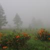 霧の中へ、霧の中へ ♪ ♬