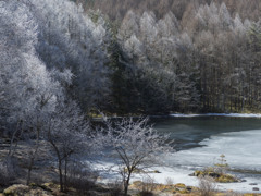 樹氷に覆われて