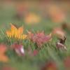秋も終わりそうin長野
