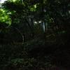 ヒメホタルの森