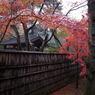 RICOH GR DIGITAL 3で撮影した(雨の平林寺)の写真(画像)