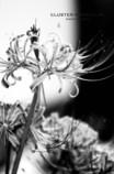 cluster-amaryllis