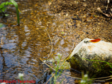 カワトンボの生息環境