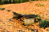 紅葉まみれのベンチ