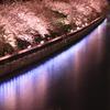 Sakura~水面に写る