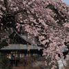 長谷寺の本堂は桜の簾を掲げて見る