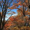 色を競う木々