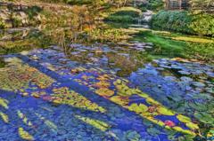 Les Nympheas von Monet