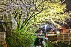 国道沿いに桜