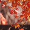 紅葉写真3