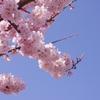 春めきの空