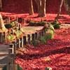 101124盛岡中央公民館庭園