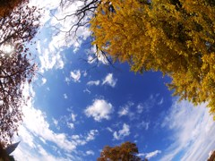 Autumn earth