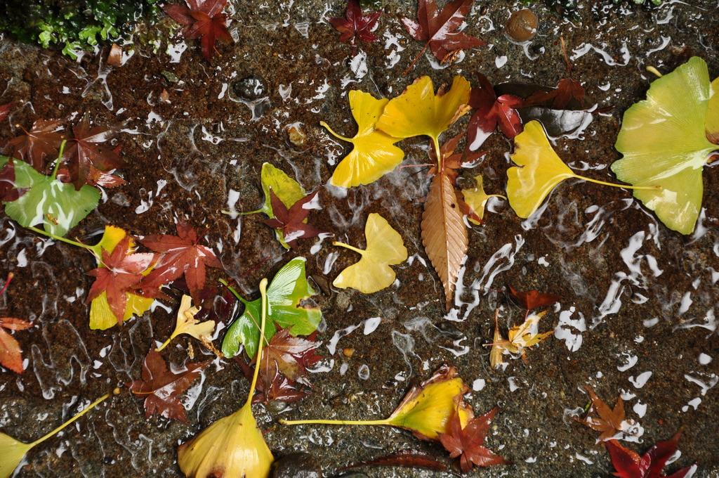 水路の落ち葉