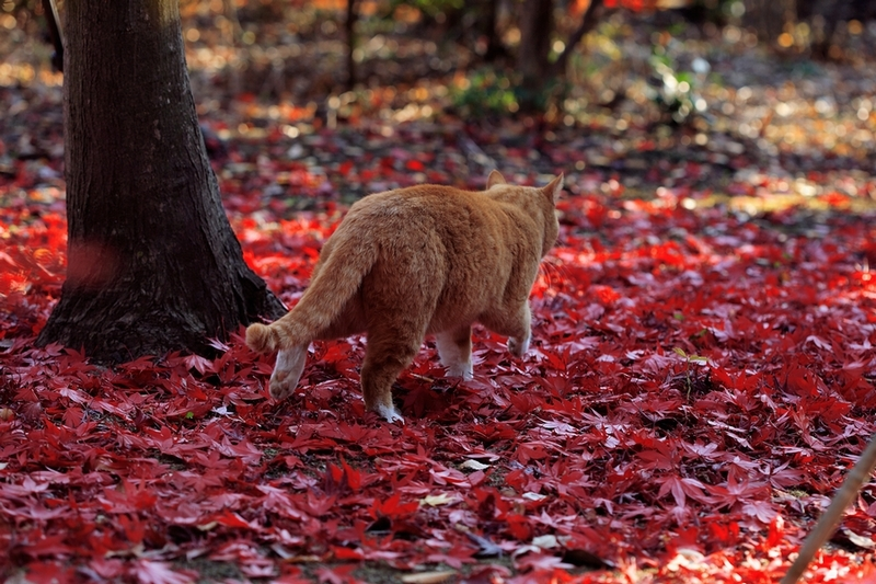 秋の色 01