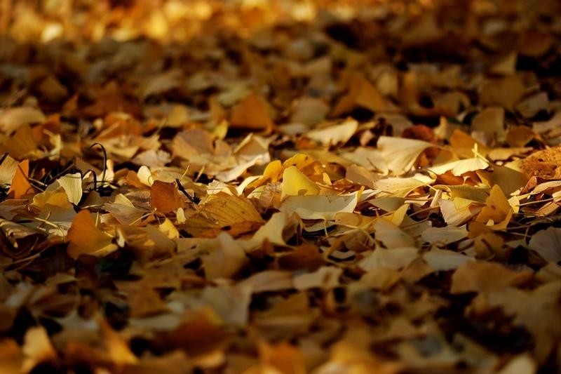 秋の色 02