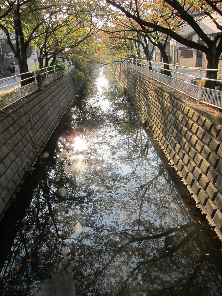 小川、橋の上から