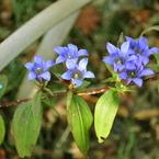 NIKON NIKON D90で撮影した植物(足元に)の写真(画像)