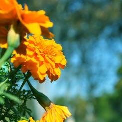 NIKON NIKON D90で撮影した植物(green, blue & ORANGE)の写真(画像)