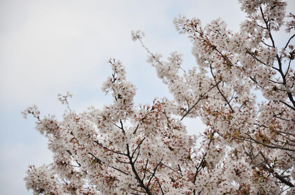 春、ピンク色