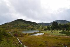 草津白根山の湿原