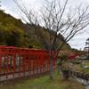 高山稲荷神社の千本鳥居3