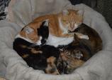 トモエになって寝る猫