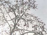 初雪の残り柿