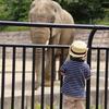 象さんとにらめっこ
