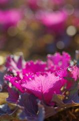 季節を彩る  -紫の影-