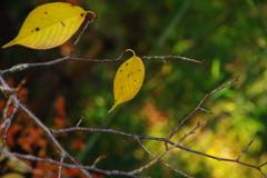 晩秋 黄の魅力