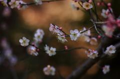 春を誘ってⅤ