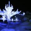 樹氷ツリー