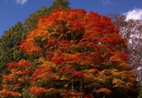 秋、真っ盛り