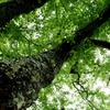 老木の威厳