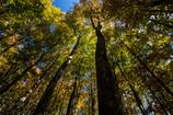 秋晴れの森