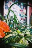 花×写真展