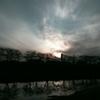 夕雲と桜並木