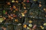 Autumn getting wet