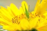 花と生き物