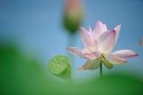 LotusⅢ