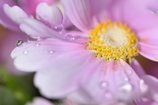 Water droplets nestled