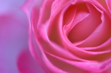 delicate fragrance