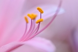 Charm of the stamen