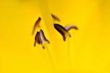 World of yellow
