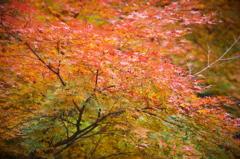 秋色さまざま
