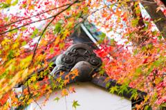 晩秋の龍安寺1