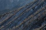 稜線のゼブラ
