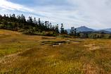 山吹色の湿原
