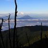 立枯れ越しの夏富士遠望